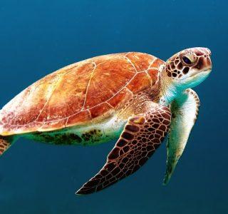 Der Finanzfisch spendet zum Schutz der Meere – Mach mit!