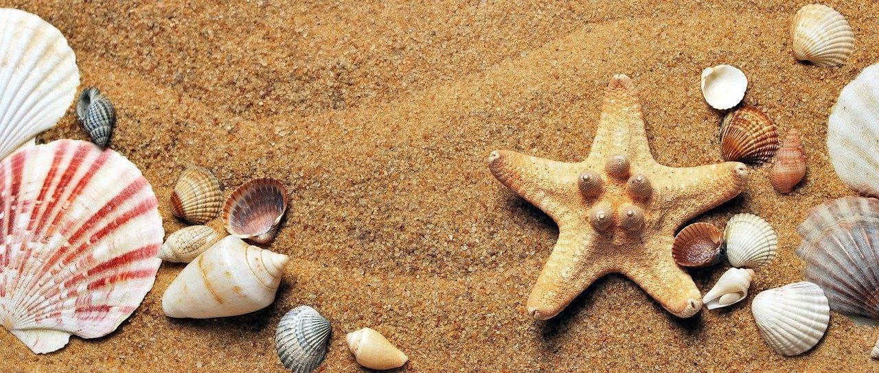 Der Finanzfisch macht Sommerpause